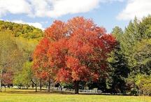 Appalachian Autumn / by Sydney Logan - Author