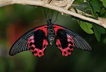 butterflies & moths  / photos of butterflies & moths / by Angielina Grass
