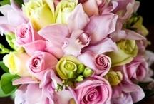 pretty petals / by Megan Welsh