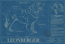 Rutger, Dutch & Spanxie's Board / Where our Leonbergers, Rutger & Dutch, and our cat, Spanxie, can pin their favorite things and wish list. / by Kirsten Becker