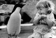 favorites   laughs / by Kirsten Becker