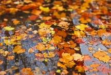 seasons   fall / by Kirsten Becker