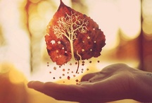 """S E A S O N {Autumn} / """"But I remember more dearly autumn afternoons in bottoms that lay intensely silent under old great trees""""   C.S. Lewis / by ~ R U T H ~"""