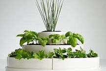 Herb garden / My kitchen window and back garden need some love / by Loren Rhoads