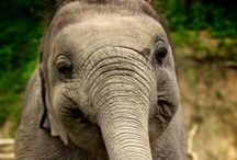 Elephants / by Elaine Hedges Cecil