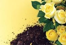 Gardening  / by Victoria Wykoff