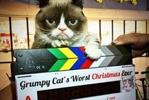 Grumpy Cat's Worst Christmas Ever / by Lifetime TV