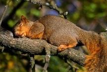 Squirrels / by Deborah Pellegrino