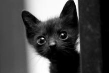 CATS / by Karina Grinebiter