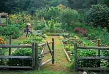 Gardening / by Jennifer Perry