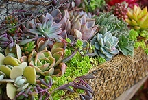 SUCCULENTS IN THE GARDEN / by Carolyn Fisk
