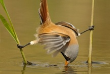 Birds / by Laura Ernst