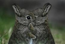 Cute Animals / by Laura Ernst