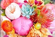 Flowers / by Gracielle Nonaka Mafioleti