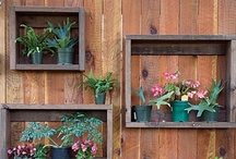 Yard/Garden / by Jenny Dodson