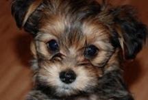 I want a puppy  / by Addie Elizabeth