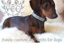 Dachshund Worship / Since my very first dachshund, I'm in love for the rest of my life... / by Susan Malkan