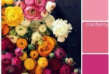 Color Combos / by Mirabella Bloom