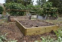 School Garden Project / by Deb Elkins