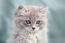 El Gato! / by Sandy Hall