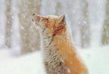 indulge my love of cute animals / by Hannah Frye