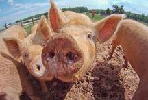 Pork / by Socorro Wapelhorst