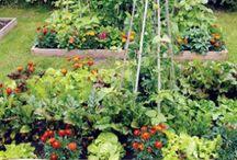 Gardening Inspirations / by Heather McCann
