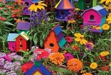 For the Love of Gardening / My refuge, my solace, my meditation... / by Becky Nystrom