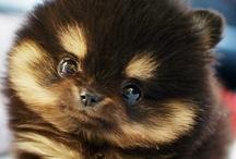 Cute Puppies / by Anna R. Williams