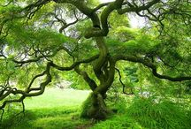 TREES! I am a lover of trees. / I love trees in real life, in art, in photographs, in silhouette..... in every form.  / by Fiona Clerk