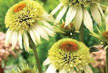 be@utiful FLOWERs... / by Jana Jannsen
