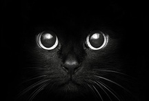 ~BLACK~I S~BLACK~ / Black is black / I want my baby back / It's gray, it's gray / Since she went away.......Ooh-Ooh!! / by Connie Jones-Matias
