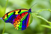 BUTTERflies... / by Jana Jannsen