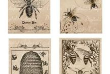 Bees and Beekeeping  / Apiary  / by Julie Curtis