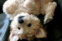 pups / by Megan Toomb