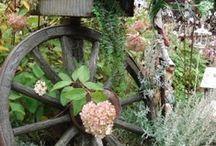 Garden / by Clydene Spencer Forbush