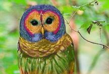Owls,Owls,Owls / by Lenore Goodnreadytogo