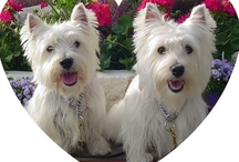 Westies,and More! / by Nancy Carrillo