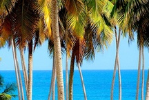 Caribbean Dreams.  / by INCOGNITO ..