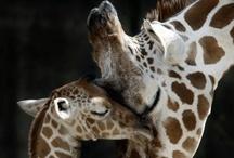 wildlife / by Kathleen Hereford