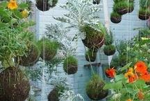 Grow them weeds / by Jilli Elletson