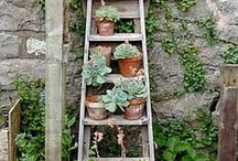 Small Space Gardening / Gardening in small spaces, whether in an apartment, small yard or vertically.  / by Verde Lifestyles