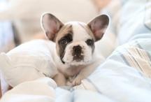 Puppies / by Kelsey Bakko