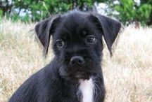 Adoptable Pets / by petMD.com