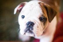 puppy love<3 / by Morgan Milne