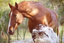horses / by Morgan Milne