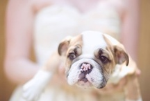 Pets At Weddings / animals, pets at weddings ~ a lovely addition! / by Bridal Musings - Wedding Blog