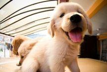 Pups / by Jorja Thompson