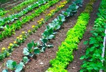Help my garden grow / by Sierra Beckman