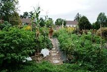 Farm & Garden / by Portia